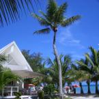 ココス 椰子の木