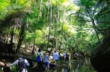 エコアドベンチャー ジャングルハイキング