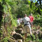 ココパーム ジャングルハイキング